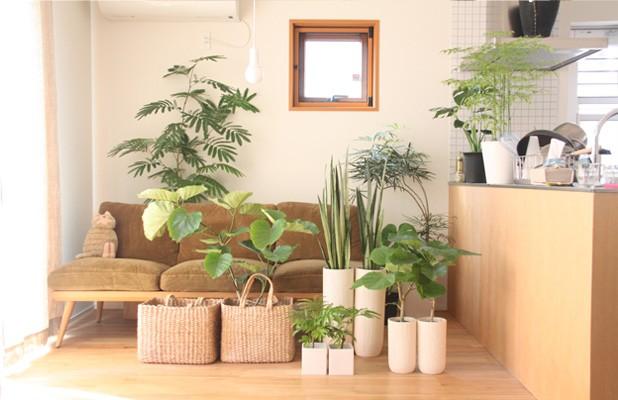開院 祝い 観葉 植物 医療関係者や他病院から贈る「開院祝い花」選び方とマナー 花助 ビ...